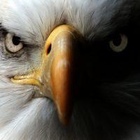 20 atitudes da águia